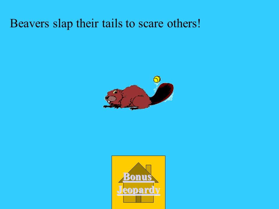 Beavers slap their tails to scare others!