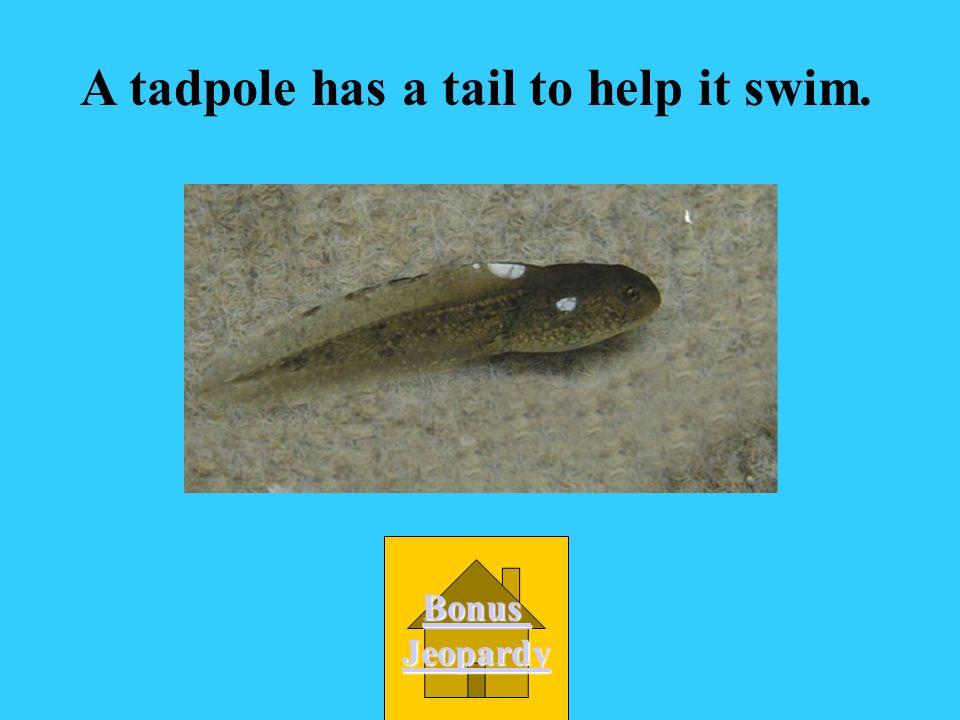 A tadpole has a tail to help it swim.
