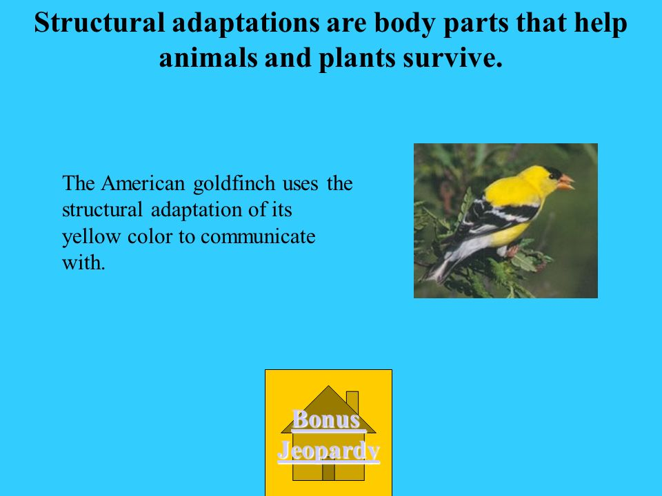 Structural adaptations are body parts that help animals and plants survive.