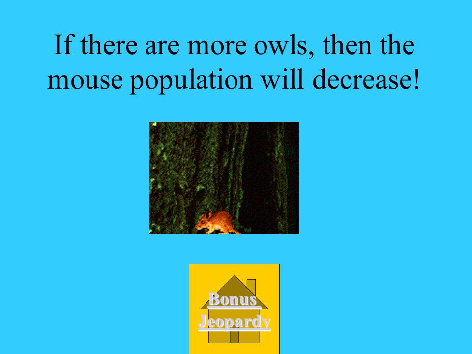 If there are more owls, then the mouse population will decrease!