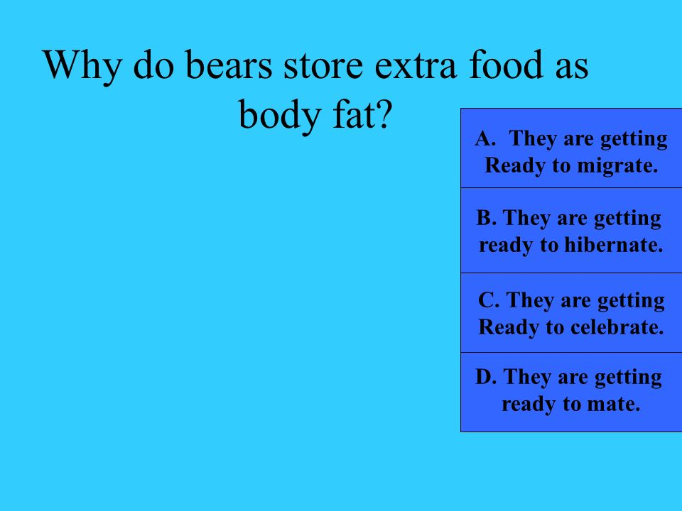 Why do bears store extra food as body fat