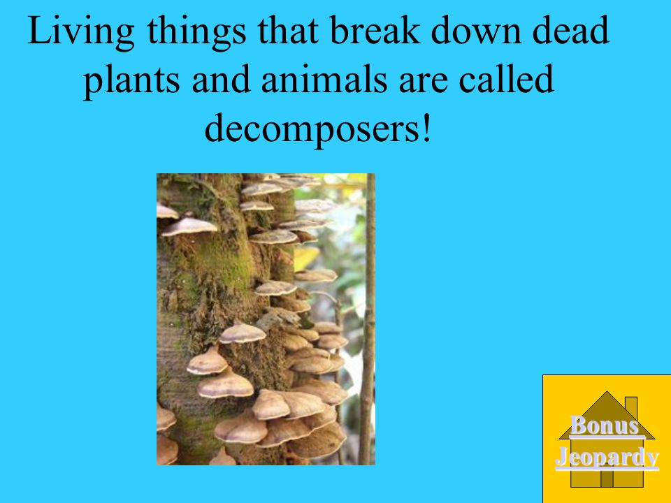 Living things that break down dead plants and animals are called decomposers!