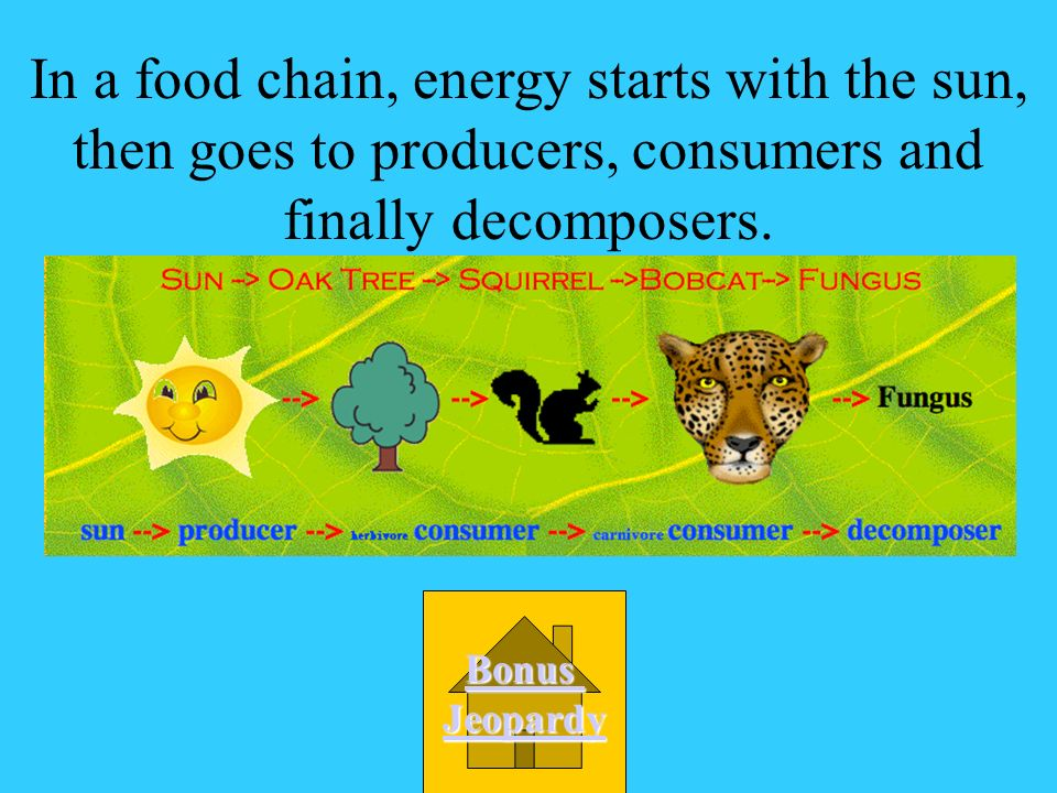 In a food chain, energy starts with the sun, then goes to producers, consumers and finally decomposers.