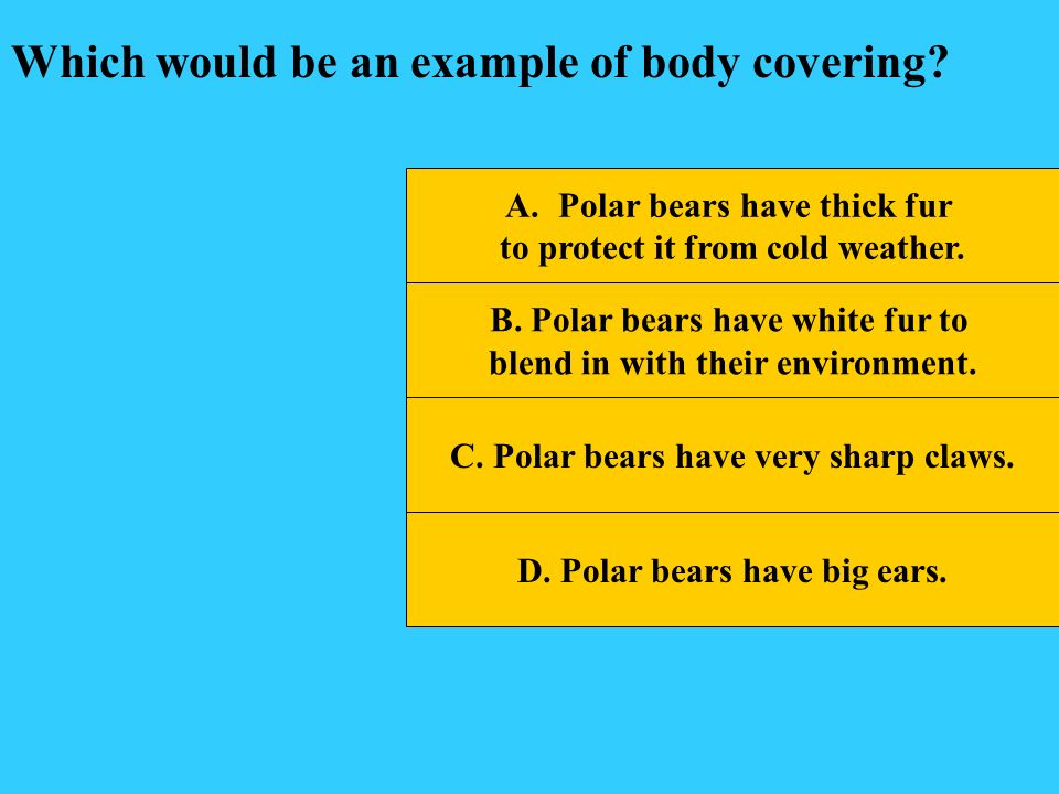 Which would be an example of body covering