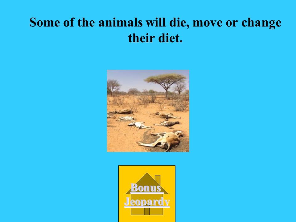 Some of the animals will die, move or change their diet.
