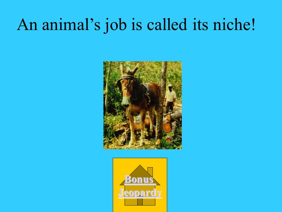 An animal's job is called its niche!