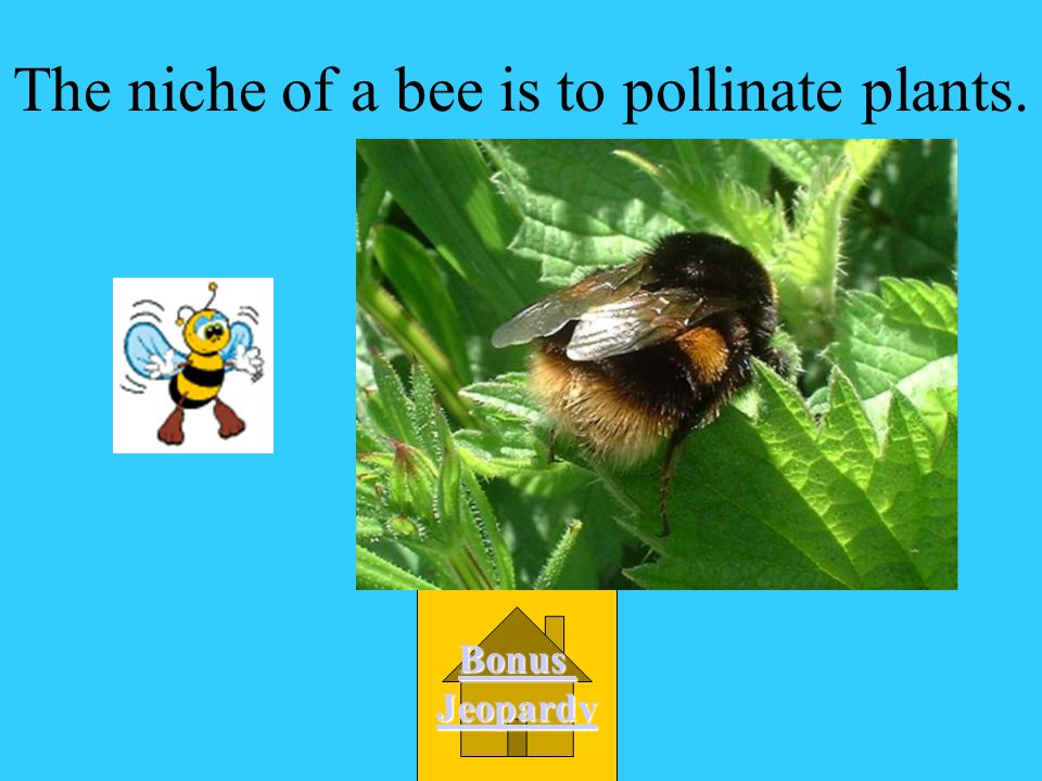 The niche of a bee is to pollinate plants.