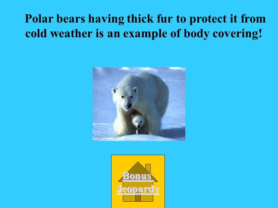 Polar bears having thick fur to protect it from cold weather is an example of body covering!