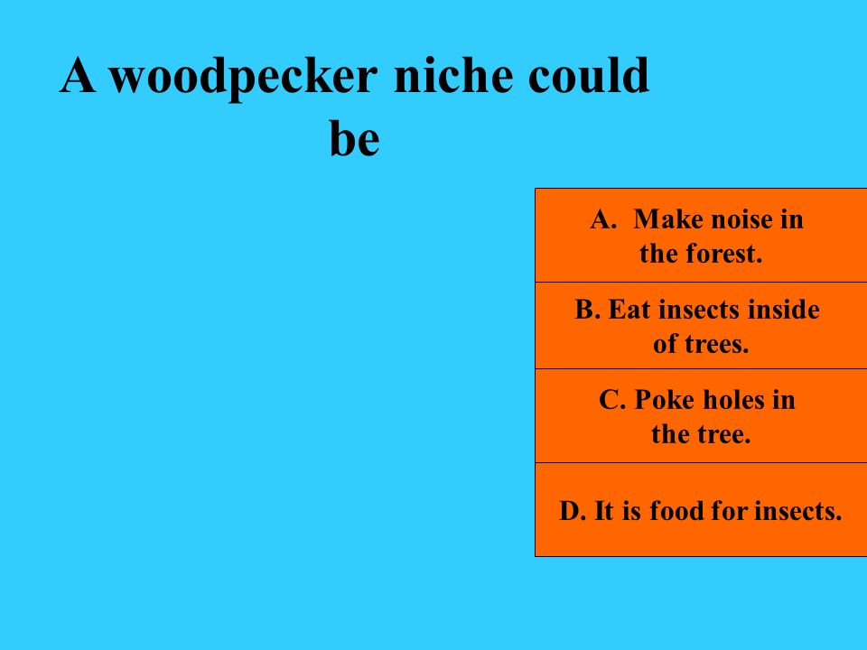 A woodpecker niche could be