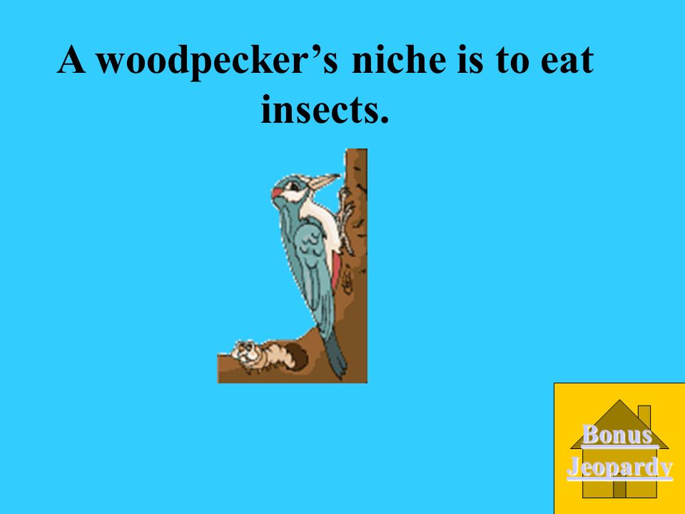 A woodpecker's niche is to eat insects.