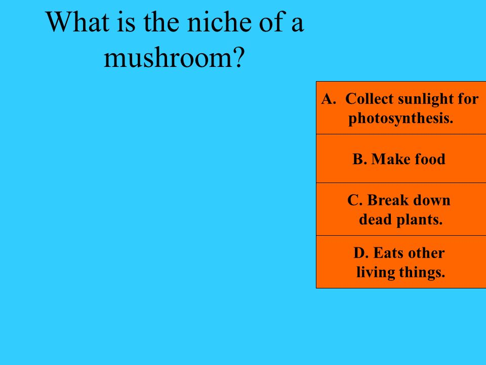 What is the niche of a mushroom