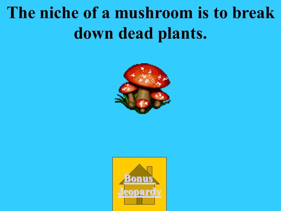 The niche of a mushroom is to break down dead plants.