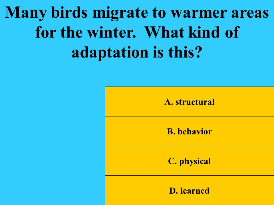 Many birds migrate to warmer areas for the winter
