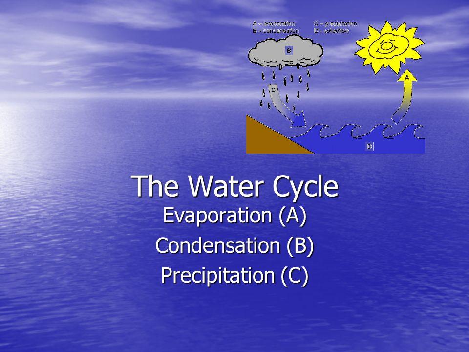 Evaporation (A) Condensation (B) Precipitation (C)