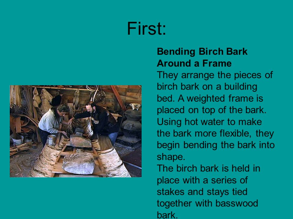First: Bending Birch Bark Around a Frame