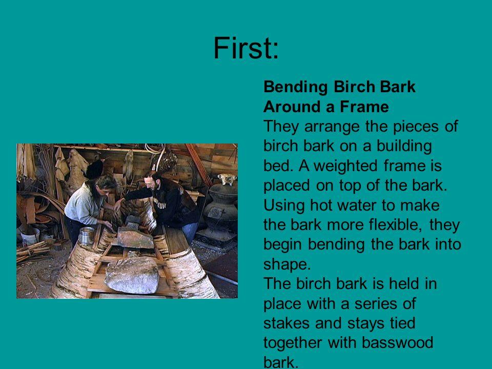 First: Bending Birch Bark Around a Frame