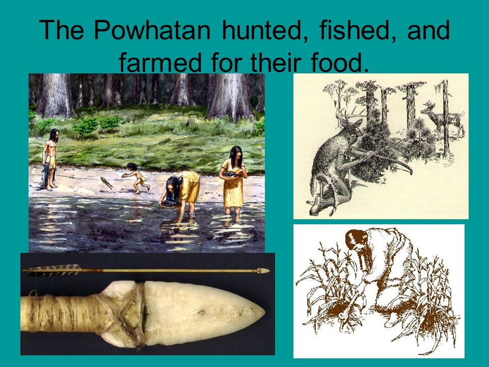The Powhatan hunted, fished, and farmed for their food.