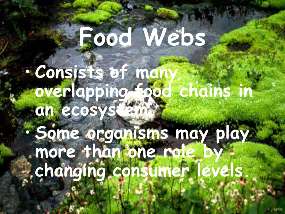 Food Webs Consists of many overlapping food chains in an ecosystem.