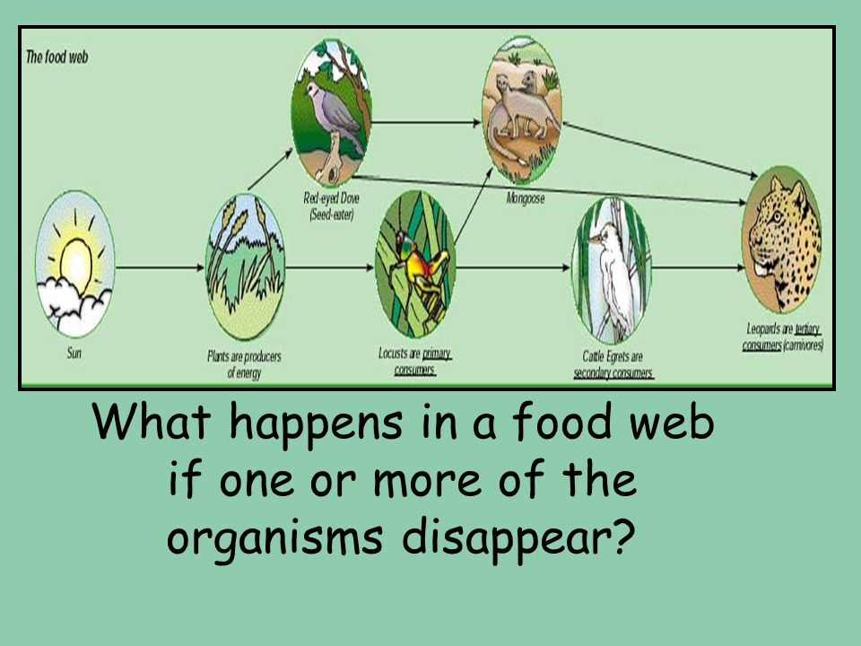 What happens in a food web if one or more of the organisms disappear