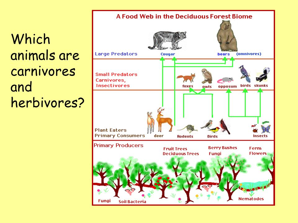 Which animals are carnivores and herbivores
