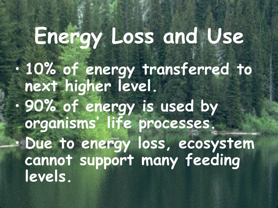 Energy Loss and Use 10% of energy transferred to next higher level.