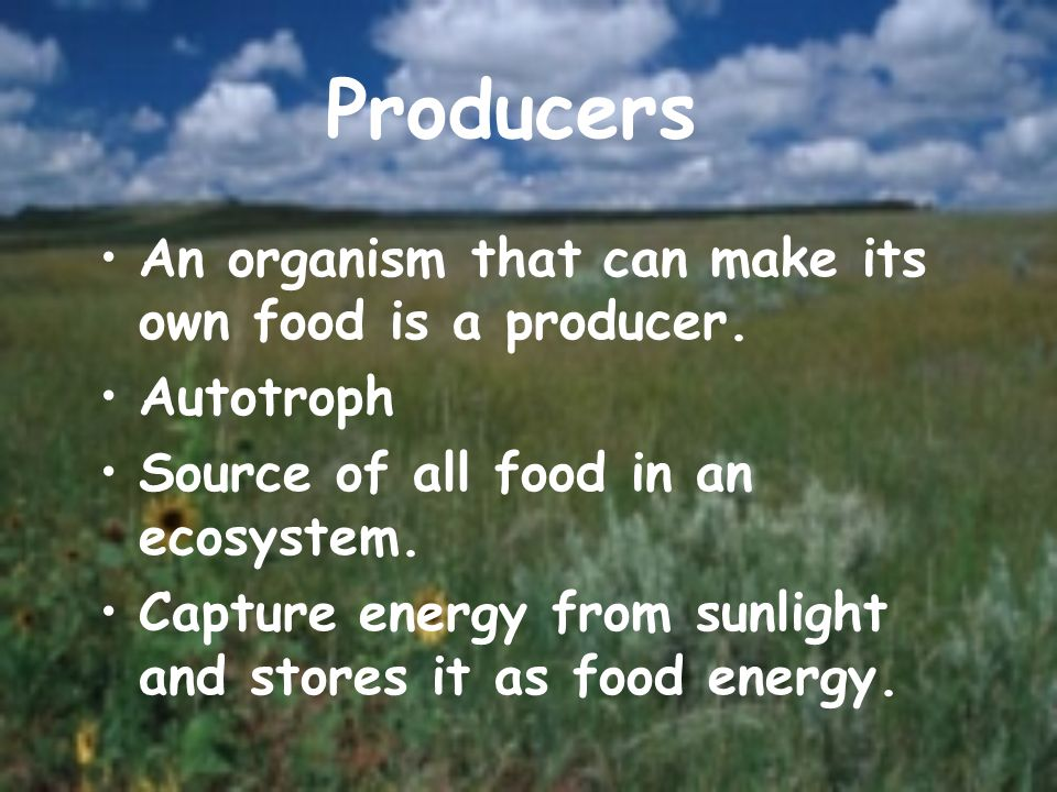Producers An organism that can make its own food is a producer.