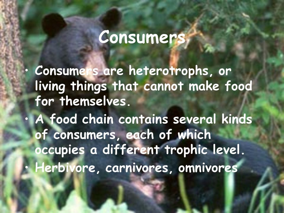Consumers Consumers are heterotrophs, or living things that cannot make food for themselves.