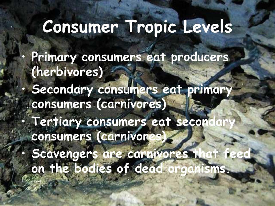 Consumer Tropic Levels