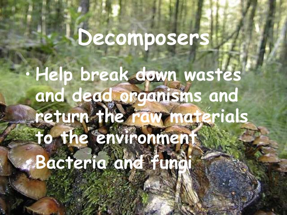 Decomposers Help break down wastes and dead organisms and return the raw materials to the environment.
