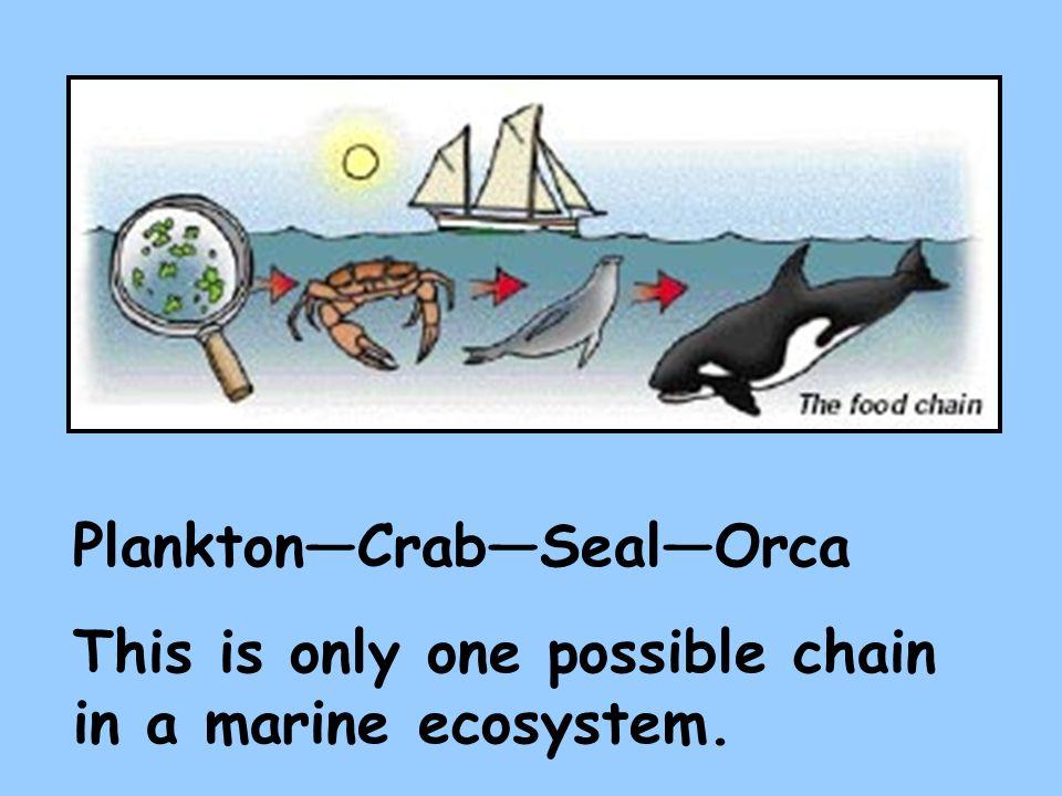Plankton—Crab—Seal—Orca