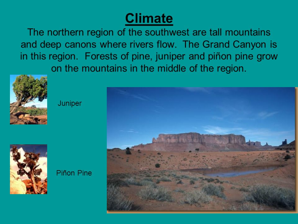 Climate The northern region of the southwest are tall mountains and deep canons where rivers flow. The Grand Canyon is in this region. Forests of pine, juniper and piñon pine grow on the mountains in the middle of the region.