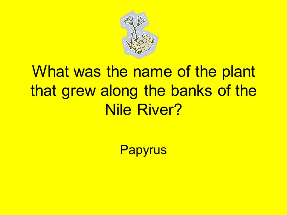 What was the name of the plant that grew along the banks of the Nile River