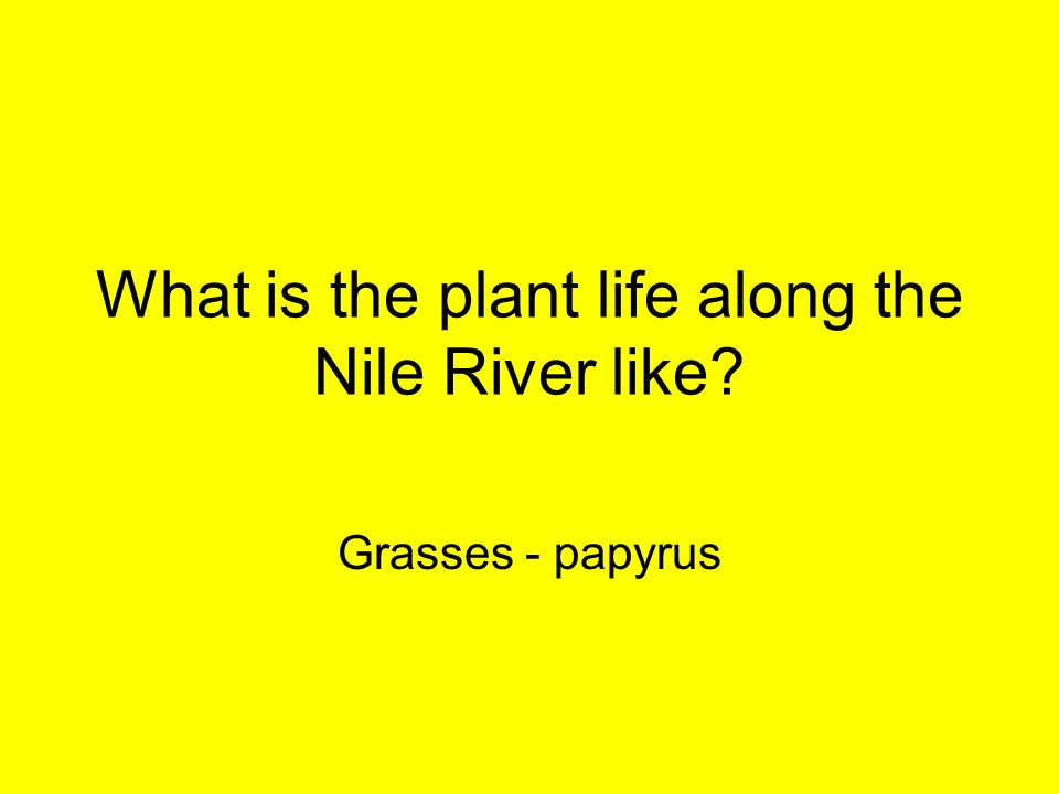 What is the plant life along the Nile River like