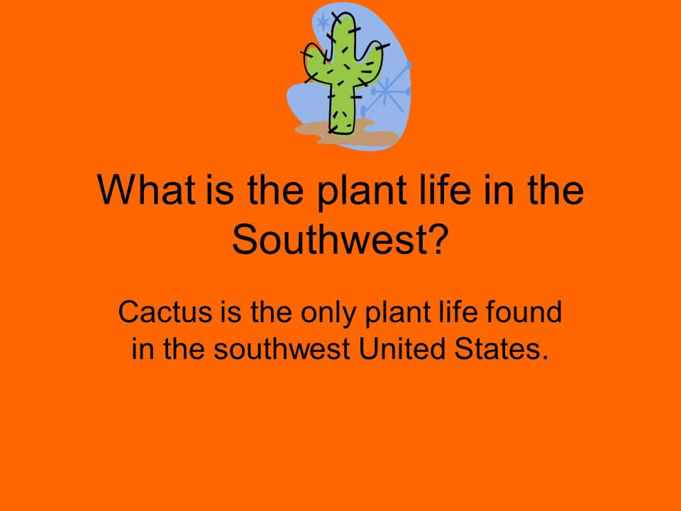 What is the plant life in the Southwest