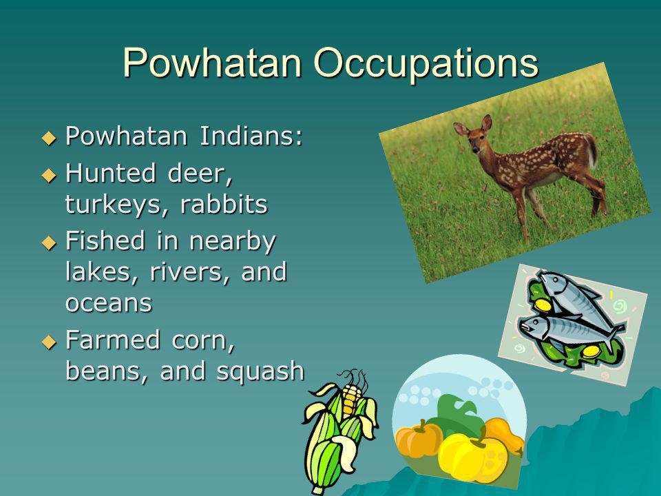 Powhatan Occupations Powhatan Indians: Hunted deer, turkeys, rabbits
