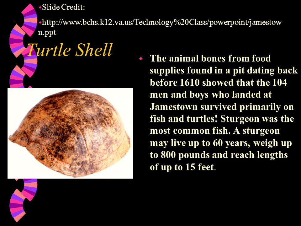 Slide Credit: http://www.bchs.k12.va.us/Technology%20Class/powerpoint/jamestown.ppt. Turtle Shell.