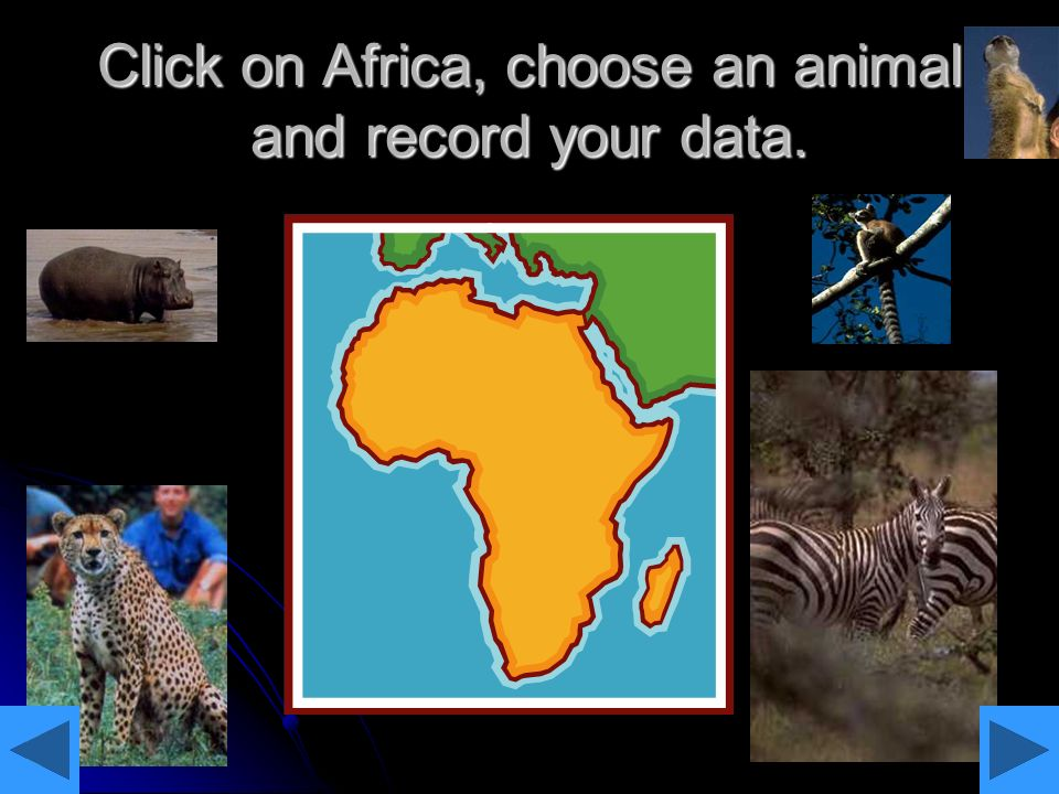 Click on Africa, choose an animal and record your data.