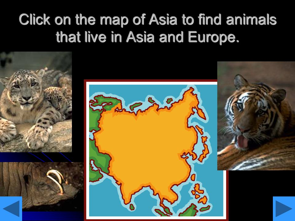 Click on the map of Asia to find animals that live in Asia and Europe.