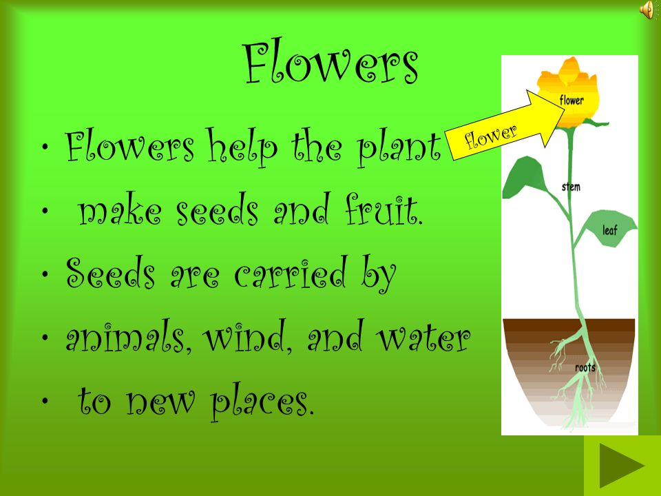 Flowers Flowers help the plant make seeds and fruit.