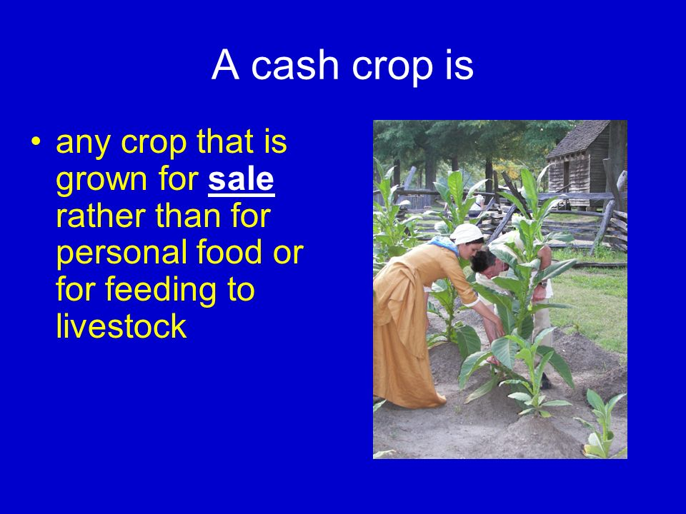 A cash crop is any crop that is grown for sale rather than for personal food or for feeding to livestock.