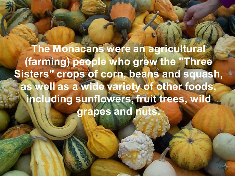 The Monacans were an agricultural (farming) people who grew the Three Sisters crops of corn, beans and squash, as well as a wide variety of other foods, including sunflowers, fruit trees, wild grapes and nuts.