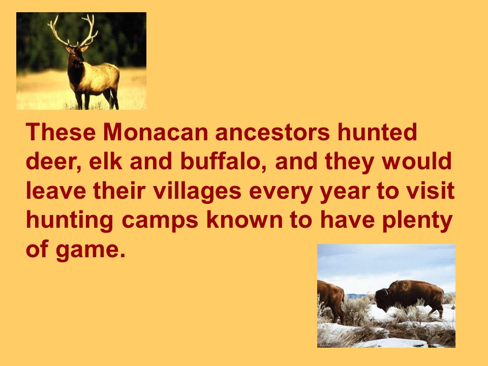 These Monacan ancestors hunted deer, elk and buffalo, and they would leave their villages every year to visit hunting camps known to have plenty of game.
