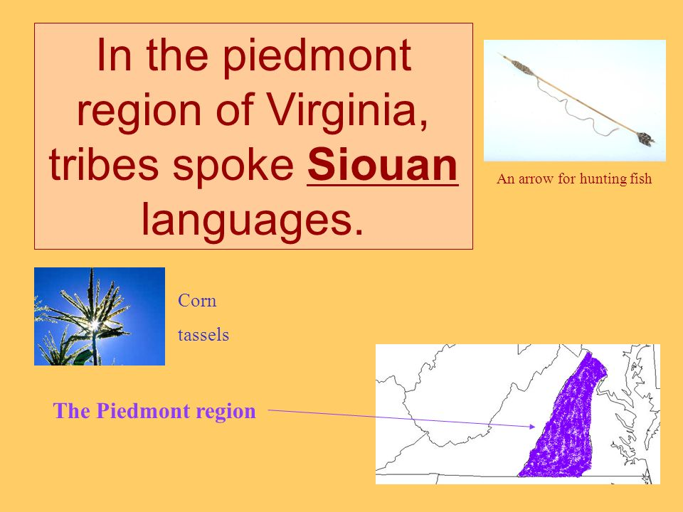 In the piedmont region of Virginia, tribes spoke Siouan languages.