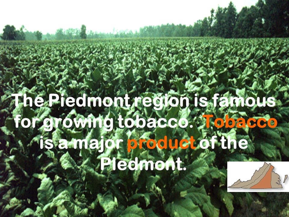 The Piedmont region is famous for growing tobacco