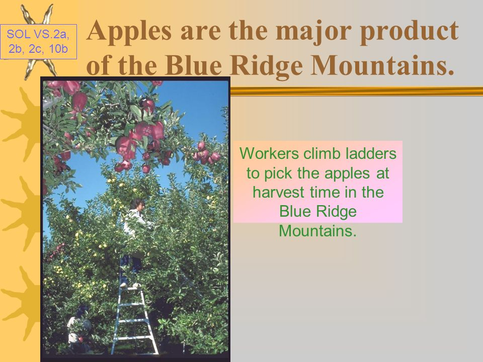Apples are the major product of the Blue Ridge Mountains.