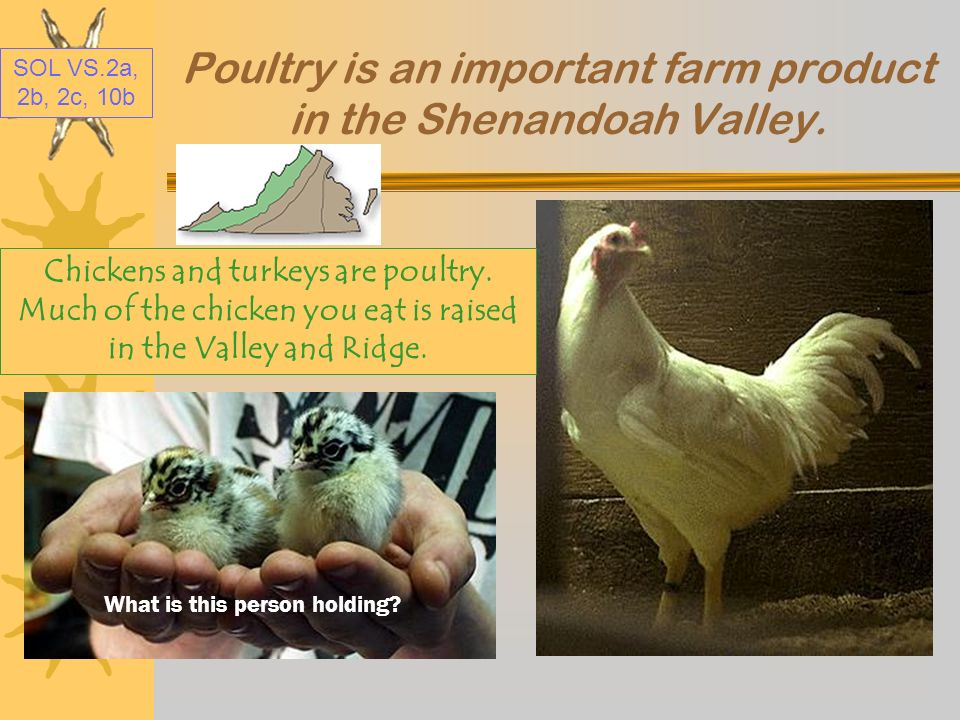 Poultry is an important farm product in the Shenandoah Valley.