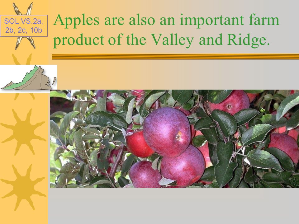 Apples are also an important farm product of the Valley and Ridge.