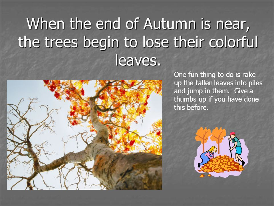 When the end of Autumn is near, the trees begin to lose their colorful leaves.