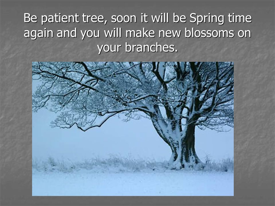 Be patient tree, soon it will be Spring time again and you will make new blossoms on your branches.