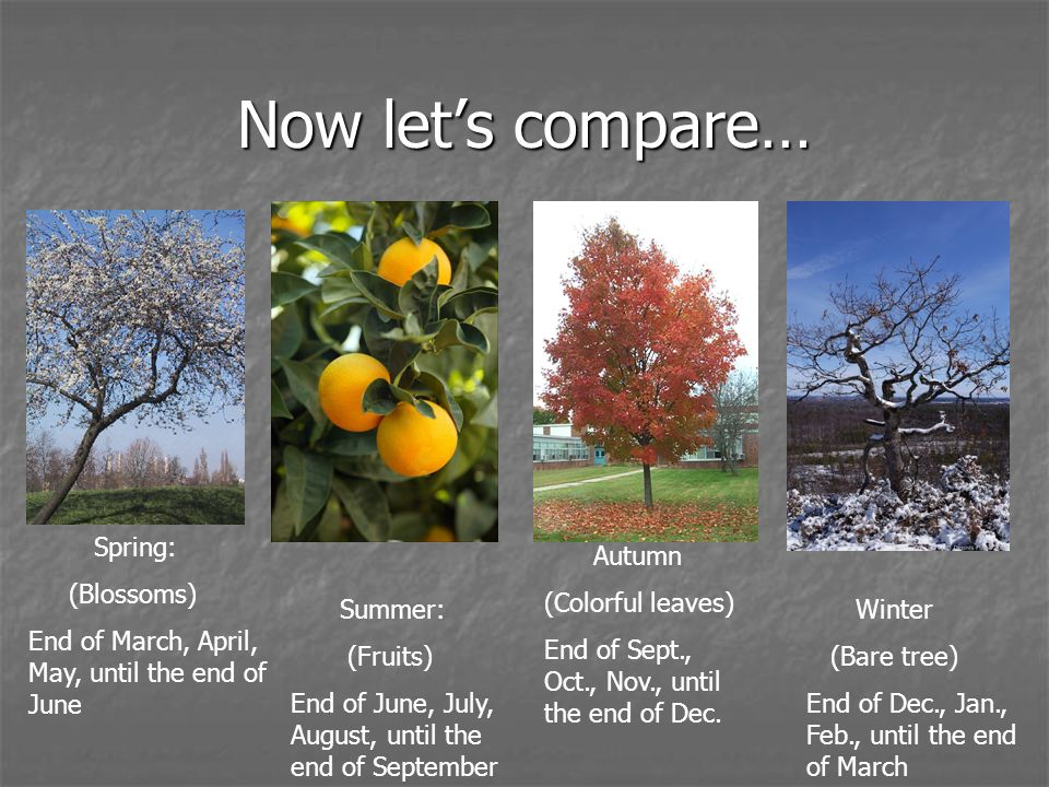Now let's compare… Spring: (Blossoms)